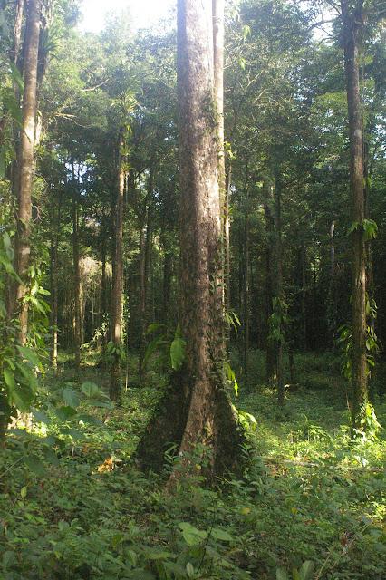 Amazone Nature Lodge, Montagne de Kaw. 18 novembre 2011. Photo : J.-M. Gayman