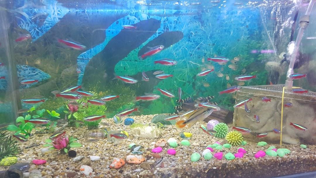 Wong Loy Kee Aquarium Shop Aquarium And Pond Supplies