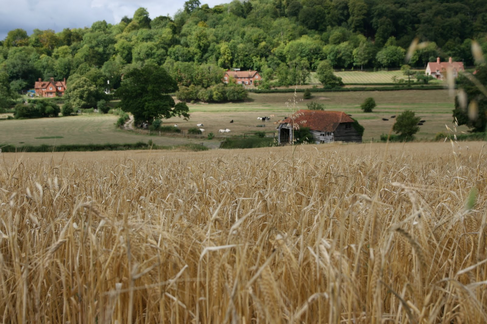 1008 004 Henley via Hambleden Circular, The Thames Valley, England Across the field to the barn