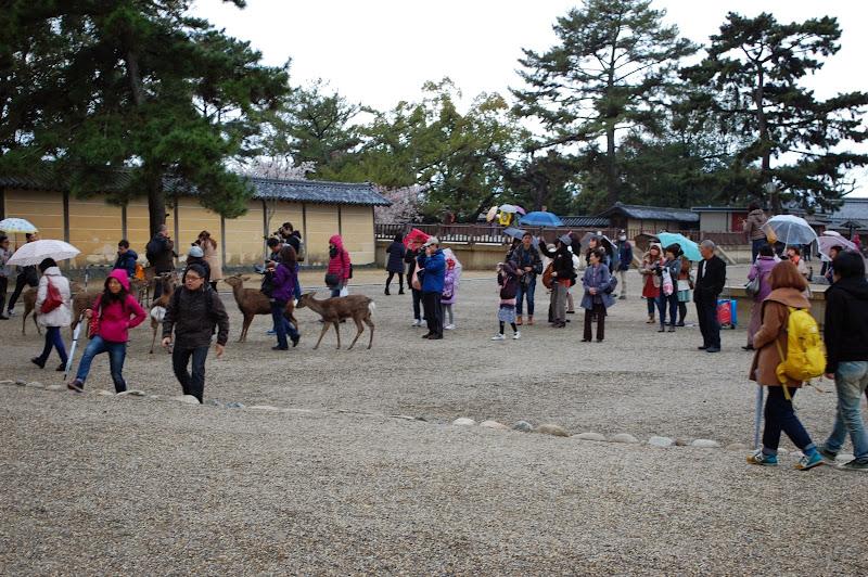 2014 Japan - Dag 8 - jordi-DSC_0428.JPG