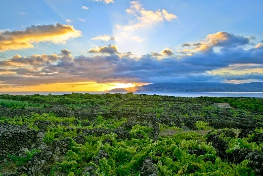 Cultura da Vinha na Ilha do Pico