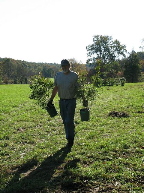 Guilford Salt Meadows Sanctuary Planting - IMG_7802.JPG