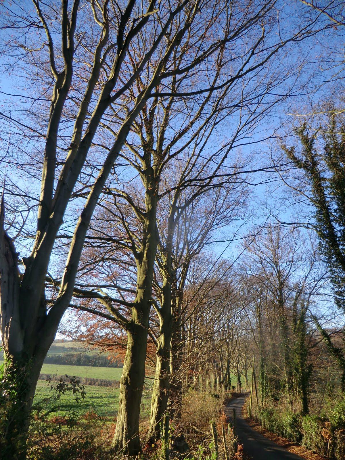 CIMG7559 Along Cockermouth Road