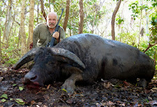 Ali Toksoy from Turkey with another bull buffalo in thick bush at Carmor Plains. This old bull has very unusual drooping horns. Several shots from the 375 H&H to stop this big bodied bull.