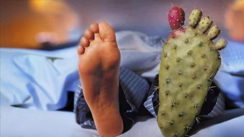 Две ноги, одна из них в виде кактуса
