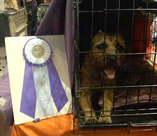 Eukanuba Dog Show  Orlando, FLBack in crate after taking Reserve Winners Bitch. Yeah, Shea!