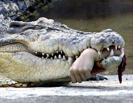 crocodile hand bitten