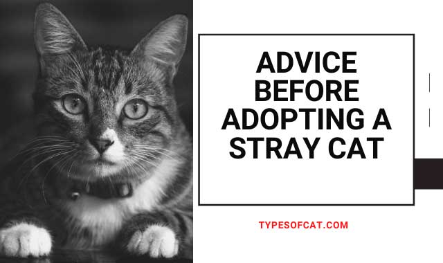 Advice before adopting a stray cat