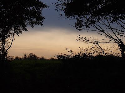 Horstead Heath