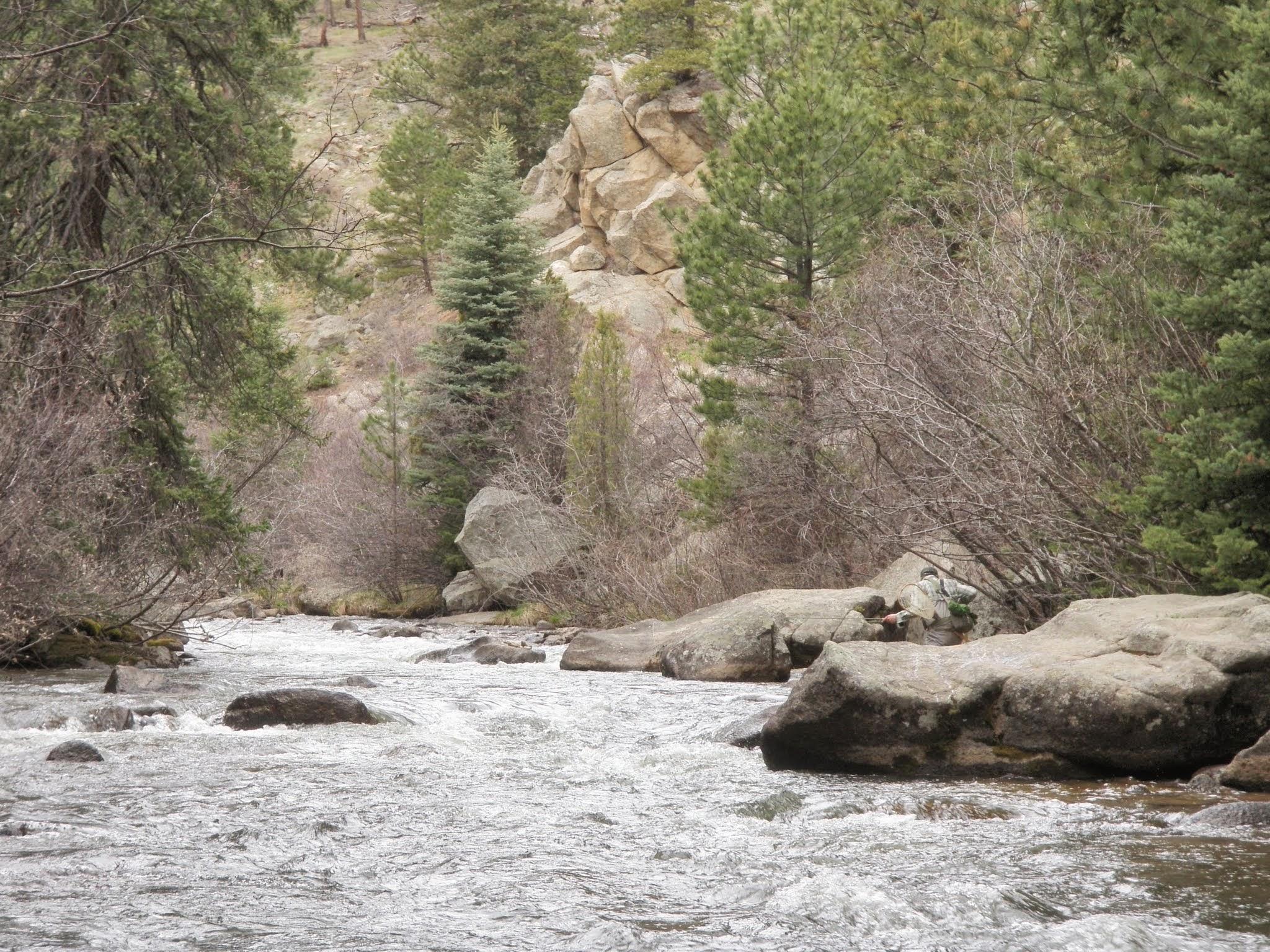 South boulder creek 04 25 2015 dave weller 39 s fly for Boulder creek fishing