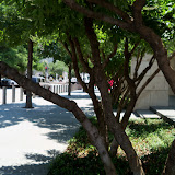 Dallas Fort Worth vacation - 100_9682.JPG