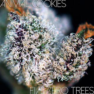 Animal Cookies Oct Macro 2