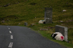 Sheep along the road