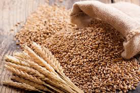 Unlocking Wheat Production With High-yielding Seed Variety Trials ~Omonaijablog