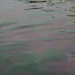 Port de pêche de Maputo : traces de moteurs
