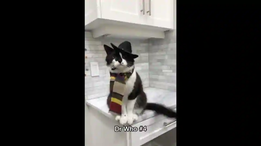 Cat dresses up as different fictional characters, looks super 'purrty'. Watch