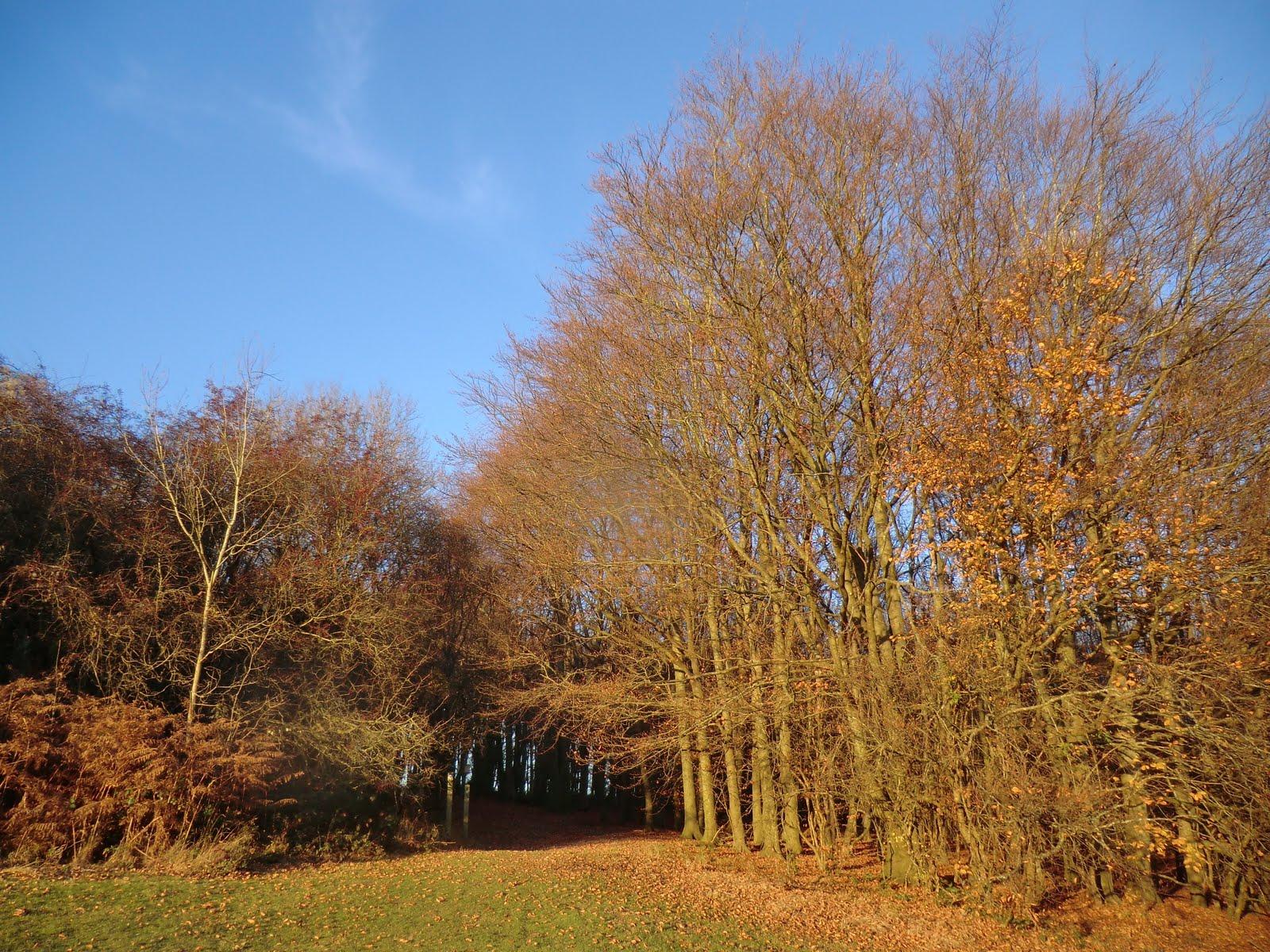 CIMG7588 Late autumn sunshine, Lullingstone Park