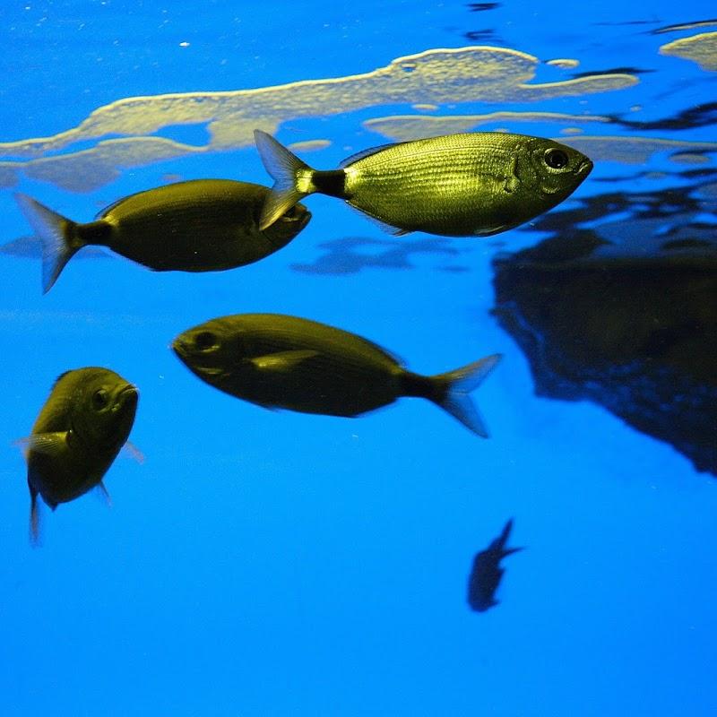 Aquarium_07.JPG
