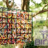 Разноцветные гнезда будут не только у ваших птиц, но и у всех соседей