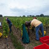 2013 vendanges du chardonnay - 2013%2B09%2B28%2BGuimbelot%2Bvendanges%2Bdu%2BChardonnay%2B124.jpg