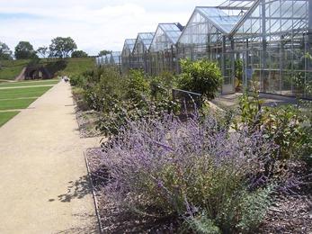 2010.08.13-034 plantes odorantes