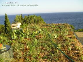 toiture vegétalisée en sphaigne au village grec a ramatuelle 83 var