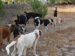 Quinta Life - Morning Dog Walk - August