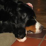 – Vi sover i mors hundekurv