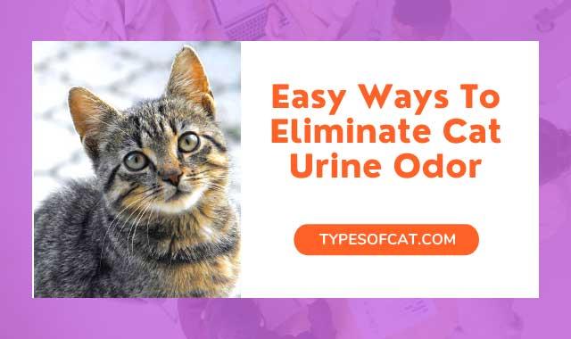Easy Ways To Eliminate Cat Urine Odor