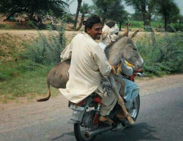 Ciclomotor con dos personas y un burro