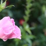 Gardening 2012 - IMG_2785.JPG