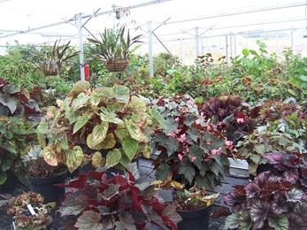 2010.08.13-012 plantes tropicales