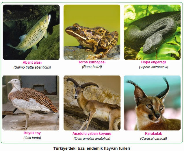 endemik hayvan türleri
