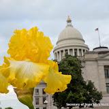 4-14-16 Irises bloom Capitol grounds