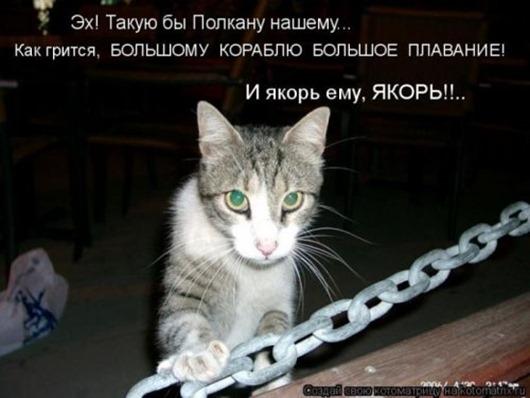 1499462170_kotomatrica-30