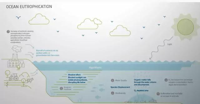 ocean eutrophication