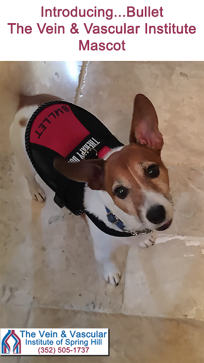 We'd like to welcome Bullet, our office mascot at The Vein & Vascular Institute! He's sending you all...