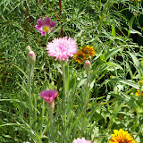 Gardening 2010, Part Three - 101_4415.JPG