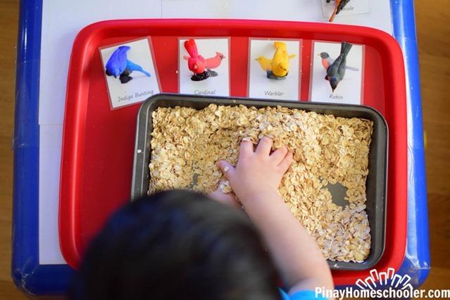 birdthemetotschool-2652