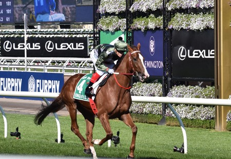 turnbull stakes_kings will dream 5