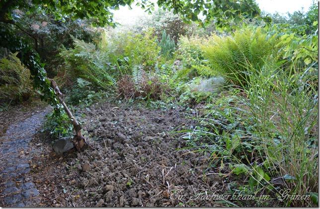 So sieht die Stelle für die neuen Gräser aus, nachdem wir sie gerodet haben.