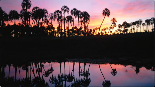 El Palmar National Park, Argentina.jpg