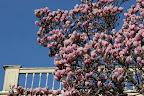 Cady House Tree