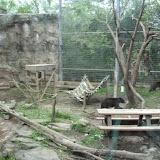 Zoo Snooze 2015 - DSCF3387.JPG