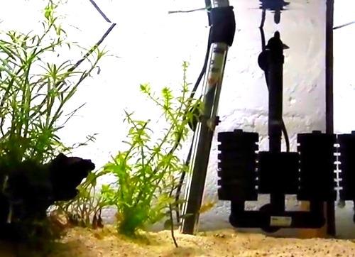 submersible-aquarium-heater