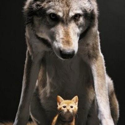 White Wolf ® ©