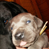 Star & True Blues February 21, 2008 Litter - HPIM0946.JPG