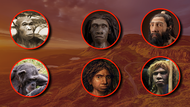 Humans Evolution - Human Ancestry