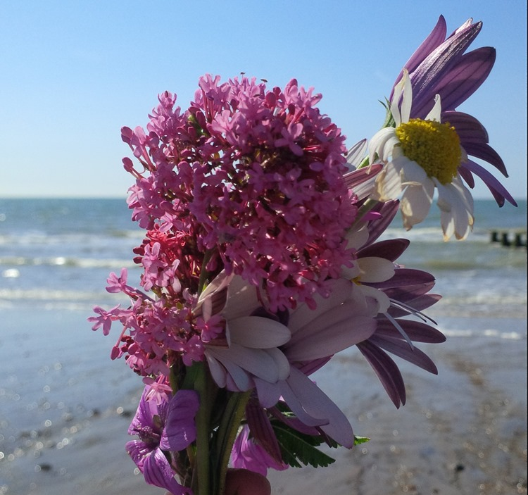 wildflowers at the beach