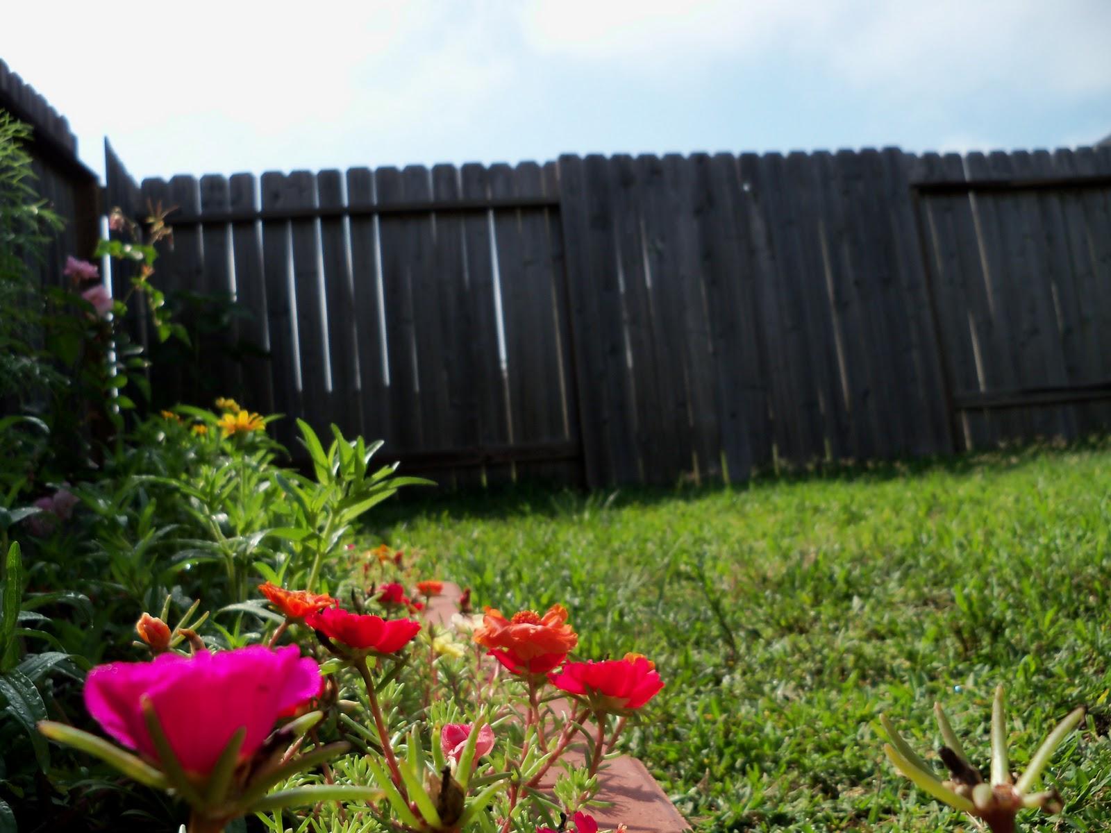 Gardening 2010, Part Two - 101_2392.JPG